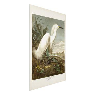 Forex Fine Art Print - Vintage Lehrtafel Weißer Reiher I - Hochformat 3:2
