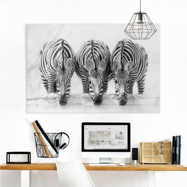 Leinwandbild - Zebra Trio schwarz-weiß - Querformat 2:3