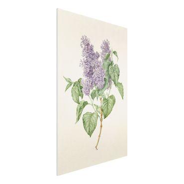 Forex Fine Art Print - Maria Geertruyd Barbiers-Snabilie - Flieder - Hochformat 3:2