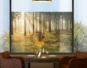 Fensterfolie - Sichtschutz Fenster No.CA48 Morning Forest - Fensterbilder