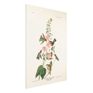 Forex Fine Art Print - Vintage Lehrtafel Kolumbianische Kolibris - Hochformat 4:3