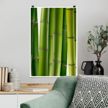 Poster - Bambuspflanzen - Hochformat 3:2