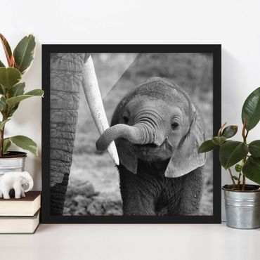 Bild mit Rahmen - Elefantenbaby - Quadrat 1:1