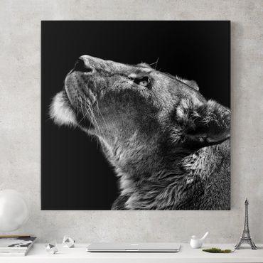 Leinwandbild - Portrait einer Löwin - Quadrat 1:1