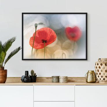 Bild mit Rahmen - Mohnblumen am Morgen - Querformat 3:4