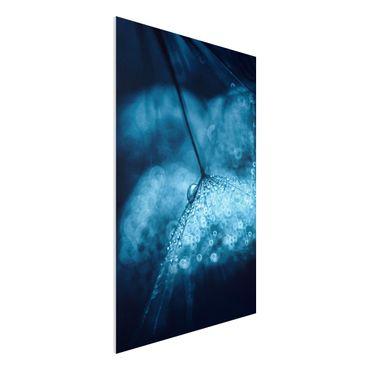 Forex Fine Art Print - Blaue Pusteblume im Regen - Hochformat 3:2