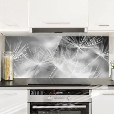 Spritzschutz Glas - Pusteblumen Nahaufnahme auf schwarzem Hintergrund - Panorama - 5:2