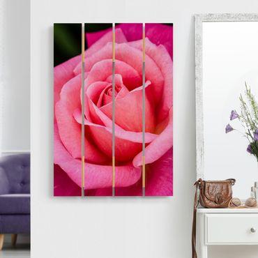 Holzbild - Pinke Rosenblüte vor Grün - Hochformat 3:2