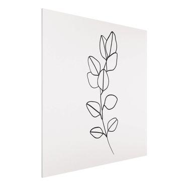Forex Fine Art Print - Line Art Zweig Blätter Schwarz Weiß - Quadrat 1:1