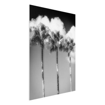 Forex Fine Art Print - Palmen vor Himmel Schwarz-Weiß - Hochformat 4:3