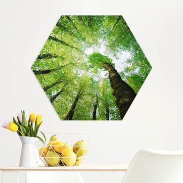 Hexagon Bild Forex - Bäume des Lebens