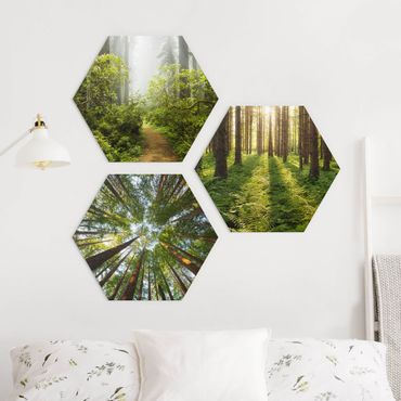 Hexagon Bild Alu-Dibond 3-teilig - Wald Trio