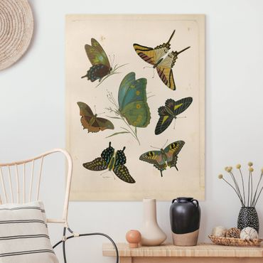 Leinwandbild - Vintage Illustration Exotische Schmetterlinge - Hochformat 4:3