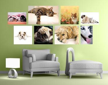 Wandtattoo Katzen und Hunde Sticker Set