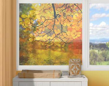 Fensterfolie - Sichtschutz Fenster Touching the water - Fensterbilder