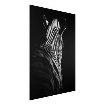 Forex Fine Art Print - Dunkle Zebra Silhouette - Hochformat 4:3