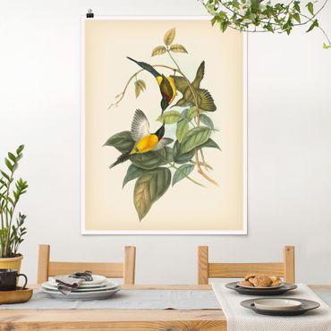 Poster - Vintage Illustration Tropische Vögel IV - Hochformat 4:3