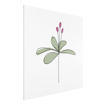 Forex Fine Art Print - Seerose Line Art - Quadrat 1:1
