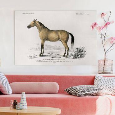 Leinwandbild - Vintage Lehrtafel Pferd - Querformat 2:3