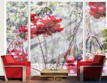 Fensterfolie - XXL Fensterbild No.CA42 Waldfrüchte - Fenster Sichtschutz