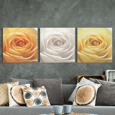 Leinwandbild 3-teilig - Trio of Pure Roses - Quadrate 1:1