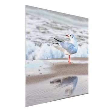 Forex Fine Art Print - Möwe am Strand vor Meer - Quadrat 1:1