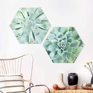 Hexagon Bild Forex 2-teilig - Sukkulente Aquarell Set I