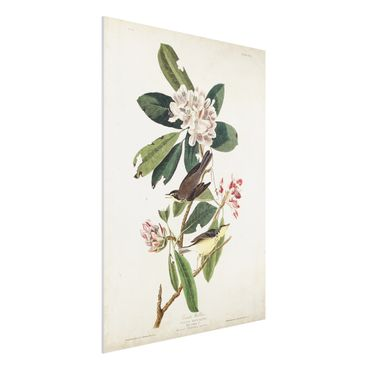 Forex Fine Art Print - Vintage Lehrtafel Grasmücke - Hochformat 4:3