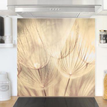 Glas Spritzschutz - Pusteblumen Nahaufnahme in wohnlicher Sepia Tönung - Quadrat - 1:1