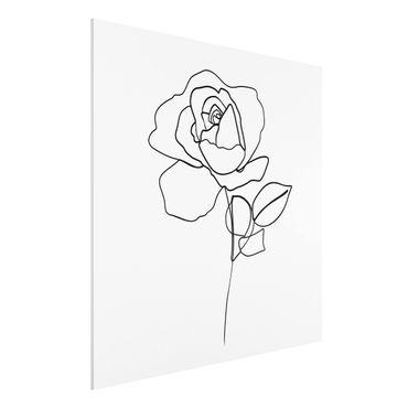 Forex Fine Art Print - Line Art Rose Schwarz Weiß - Quadrat 1:1
