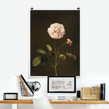 Poster - Barbara Regina Dietzsch - Essig-Rose mit Hummel - Hochformat 4:3