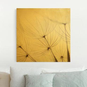 Leinwandbild Gold - Sanfte Gräser - Quadrat 1:1
