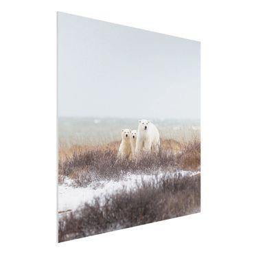 Forex Fine Art Print - Eisbärin und ihre Jungen - Quadrat 1:1