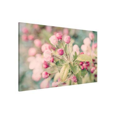 Magnettafel - Apfelblüte Bokeh rosa - Memoboard Querformat 2:3