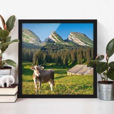 Bild mit Rahmen - Schweizer Almwiese mit Kuh - Quadrat 1:1