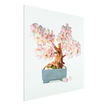 Forex Fine Art Print - Jonas Loose - Bonsai mit Marshmallows - Quadrat 1:1