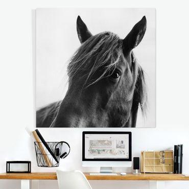 Leinwandbild - Neugieriges Pferd - Quadrat 1:1
