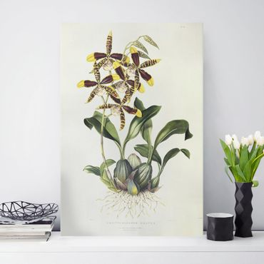 Leinwandbild - Maxim Gauci - Orchidee II - Hochformat 3:2