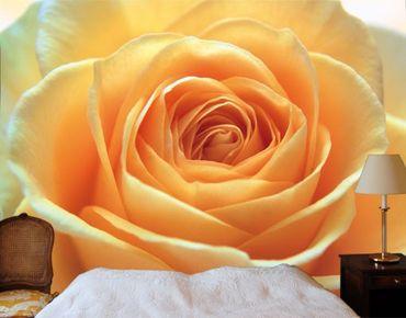 "Papiertapete - Fototapete No.39 ""THE ORANGE ROSE"" 400x280cm"