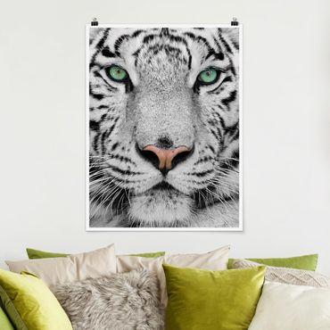 Poster - Weißer Tiger - Hochformat 3:4