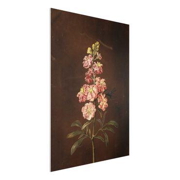 Forex Fine Art Print - Barbara Regina Dietzsch - Eine rosa Garten-Levkkoje - Hochformat 4:3