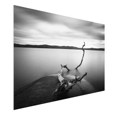 Forex Fine Art Print - Sonnenuntergang am See schwarz-weiß - Querformat 2:3