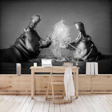 Fototapete Hippo Fight