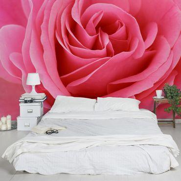 Fototapete Lustful Pink Rose