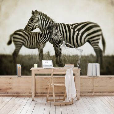 Fototapete Zebrapaar