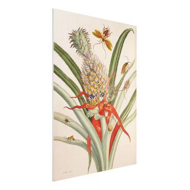 Forex Fine Art Print - Anna Maria Sibylla Merian - Ananas mit Insekten - Hochformat 4:3