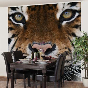 Fototapete Tiger Eyes