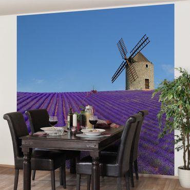 Fototapete Lavendelduft in der Provence