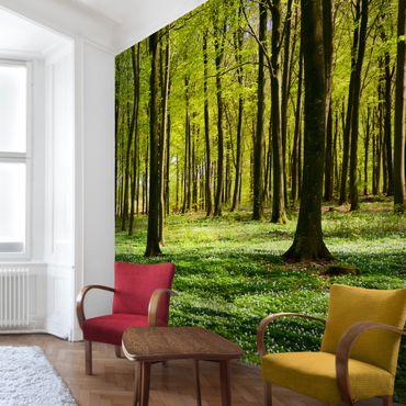 Fototapete Waldwiese