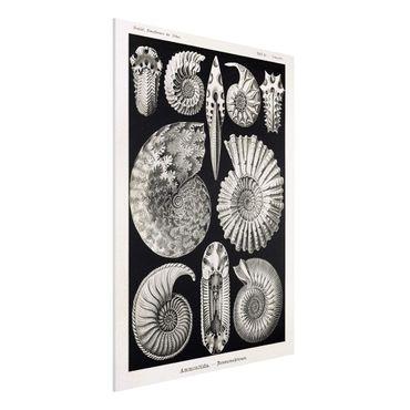 Forex Fine Art Print - Vintage Lehrtafel Fossilien Schwarz Weiß - Hochformat 4:3